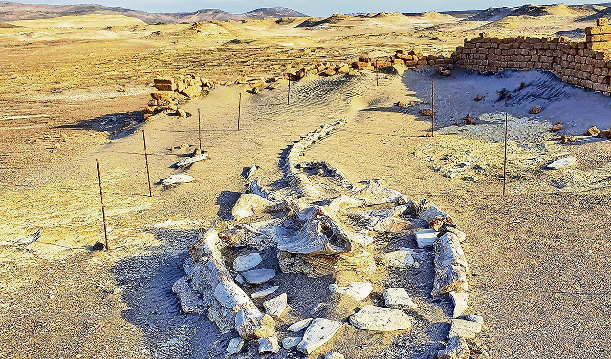 Dr. Rodolfo Salas lidera proyecto de investigación paleontológico en Arequipa